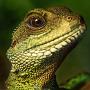 Green Reptile