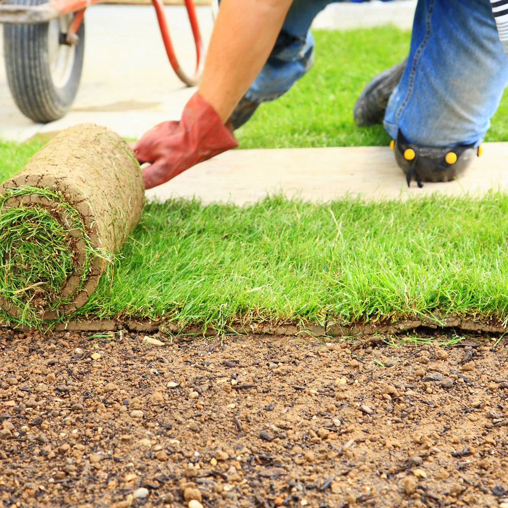 Как правильно посеять и посадить газон на даче своими руками 33