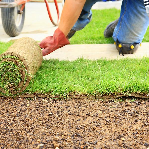 Газонная трава когда сажать 1