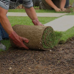 Laying sod...