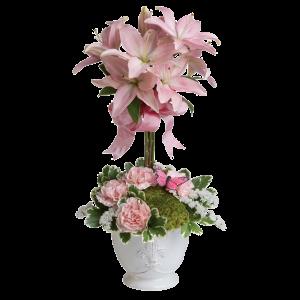 Teleflora's Blushing Lilies 3