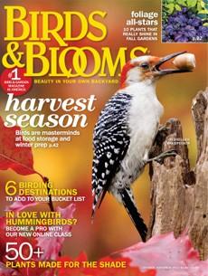 star magazine 18 november 2013