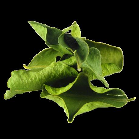 Organic Dried Kaffir Lime Leaves