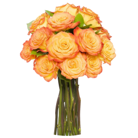 12 Long Stem Orange Roses - Without Vase