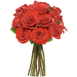 12 Long Stem Red Roses - Without Vase