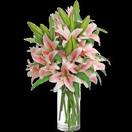 Pink Stargazer Lily Bouquet (13 Stems)