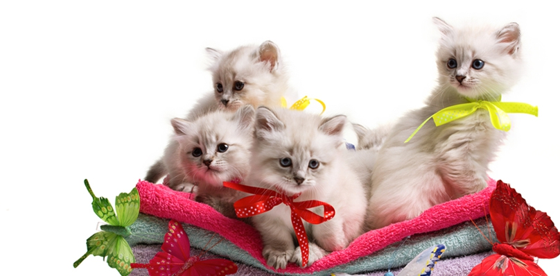 Pack of Purina
