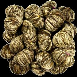 Primula TMV-2012 Flowering Green-Tea
