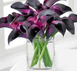 beauty_calla_lily_bouquet_1