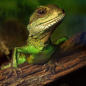 Green Reptile 1 copy