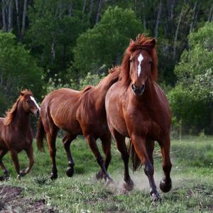 Running Horses 1 copy