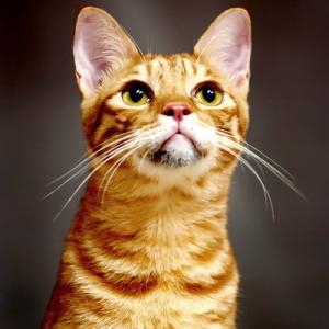 Yellow Kitten 1 copy