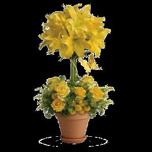 Yellow Fellow 1