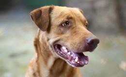 Beautiful homeless mongrel dog