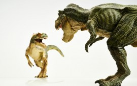 Museum quality dinosaurs